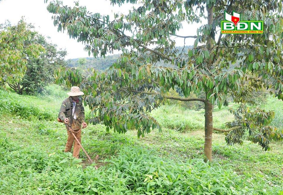 Ban hành Quy định về chính sách khuyến khích, hỗ trợ đầu tư vào tỉnh Đăk Nông