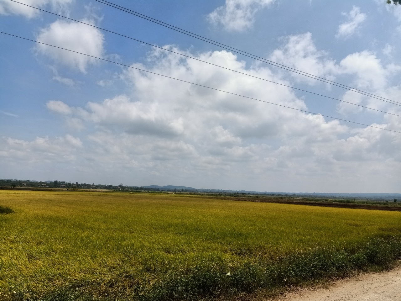 Về việc phê duyệt điều chỉnh, bổ sung kế hoạch lựa chọn nhà thầu dự án: Phát triển cơ sở hạ tầng nông thôn phục vụ sản xuất cho các tỉnh Tây Nguyên, vốn vay Ngân hàng Phát triển Châu Á (ADB)