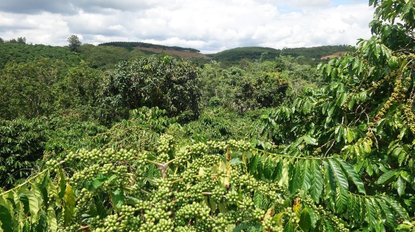 Quy định định mức hỗ trợ đầu tư phát triển kết cấu hạ tầng các Hợp tác xã nông nghiệp trên địa bàn tỉnh Đăk Nông năm 2020